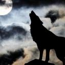 Wolf Lone